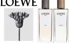 loewe 001 perfume  240x150 - Loewe 香水 难以捉摸的遐想