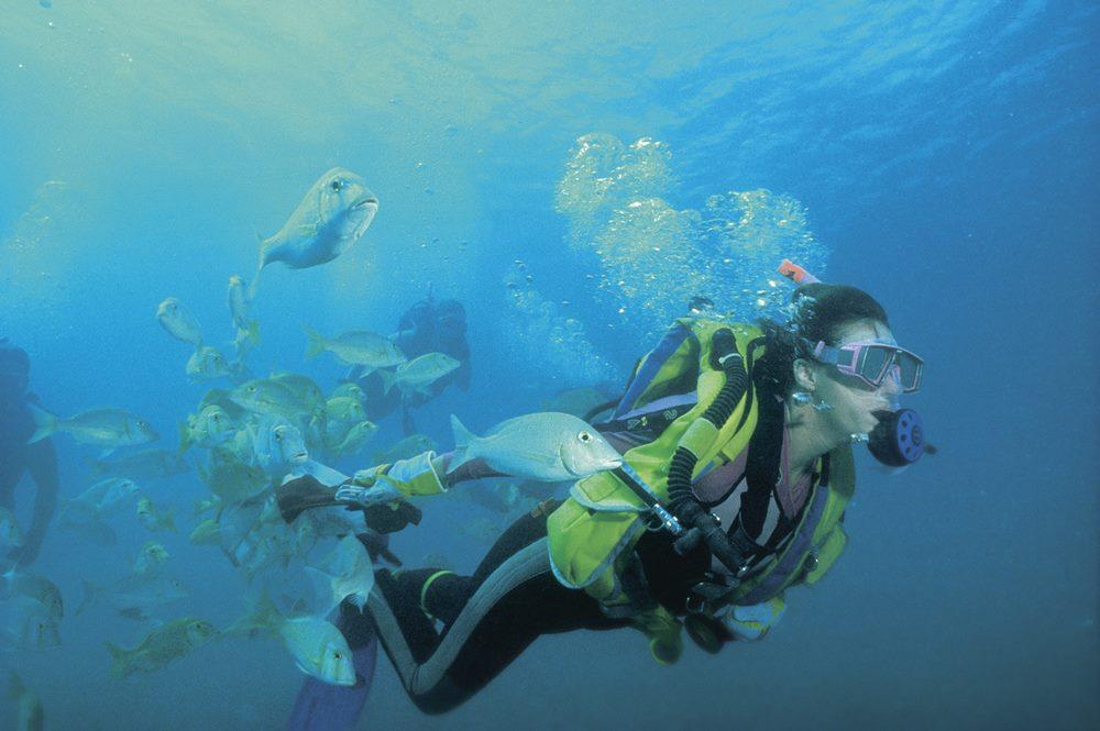 western australia Diver at Ningaloo Marine Park - 遨游西澳大利亚海洋