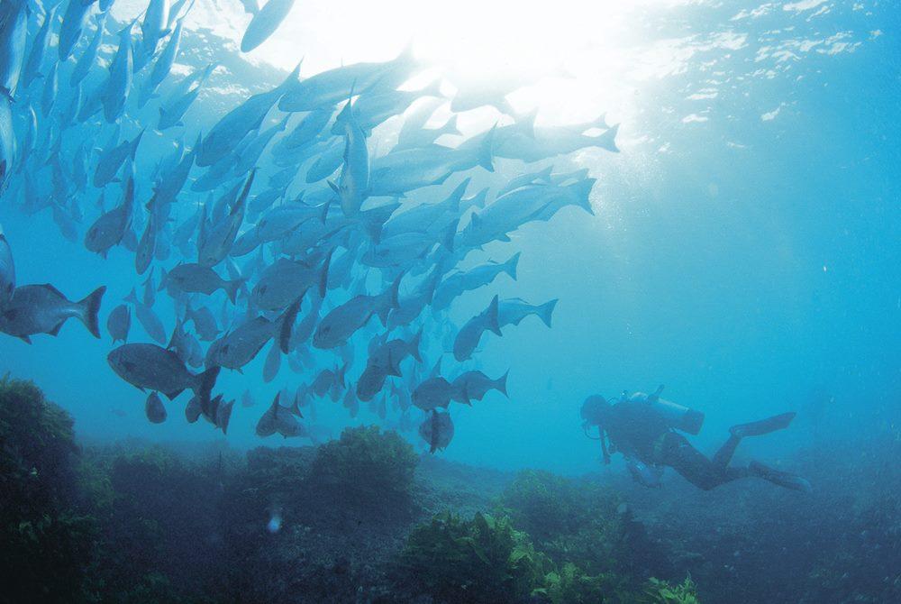 western australia Diving in Busselton - 遨游西澳大利亚海洋