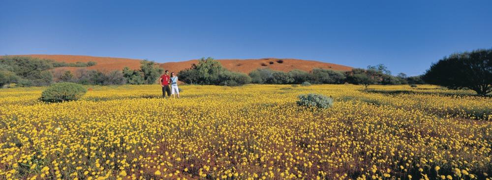 discover western australia wildflower seasons wooleen station  - 到西澳去感受赏花海的浪漫