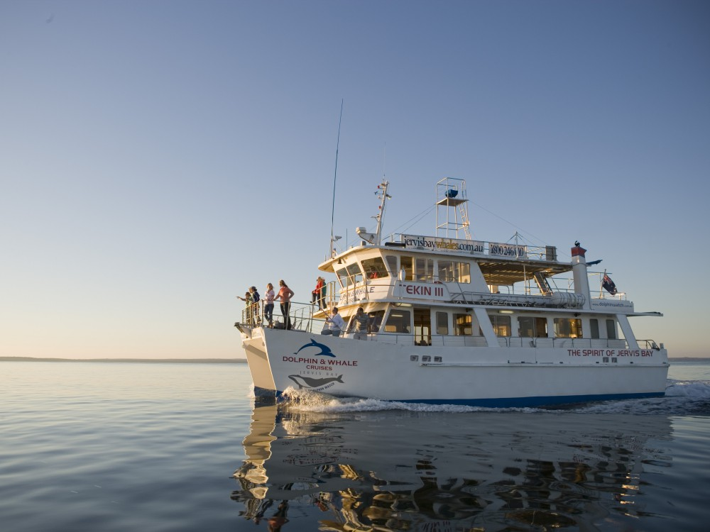 whale watching spots in sydney and nsw 3 - 澳洲赏鲸景点大公开!