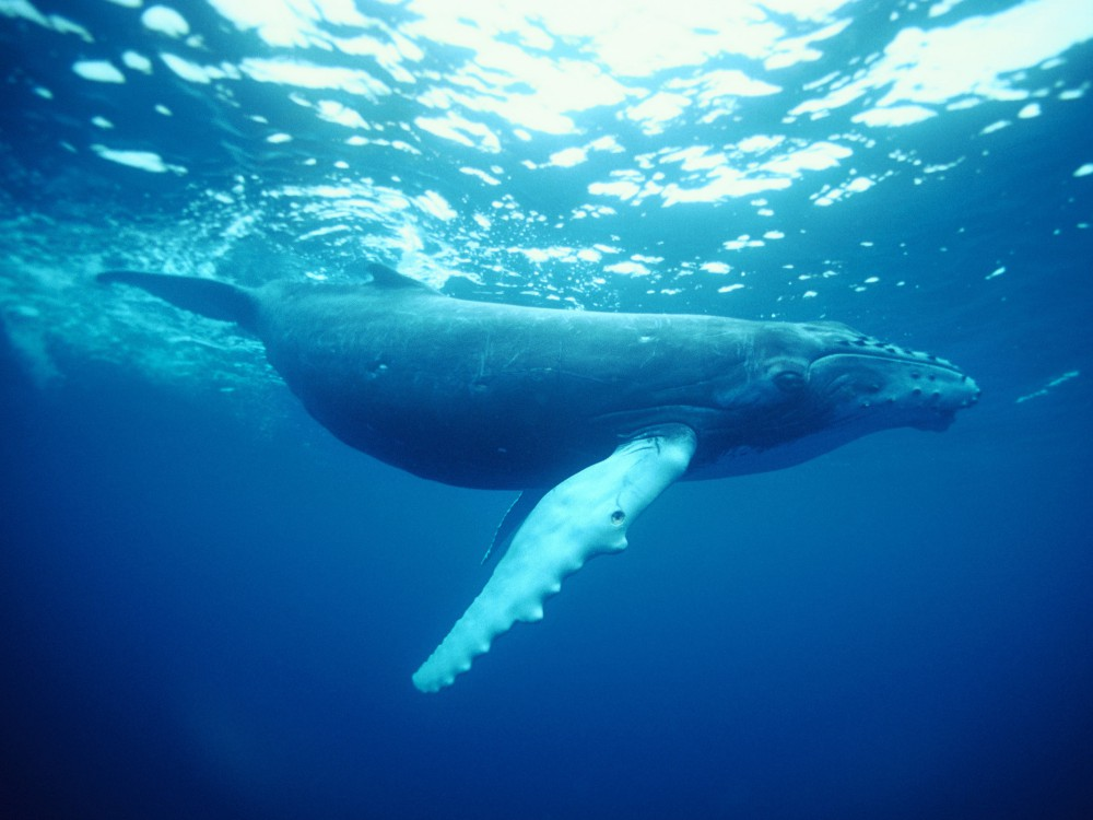 whale watching spots in sydney and nsw 4 - 澳洲赏鲸景点大公开!