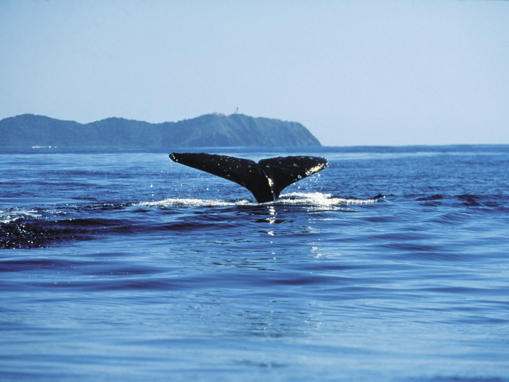 whale watching spots in sydney and nsw 6 - 澳洲赏鲸景点大公开!