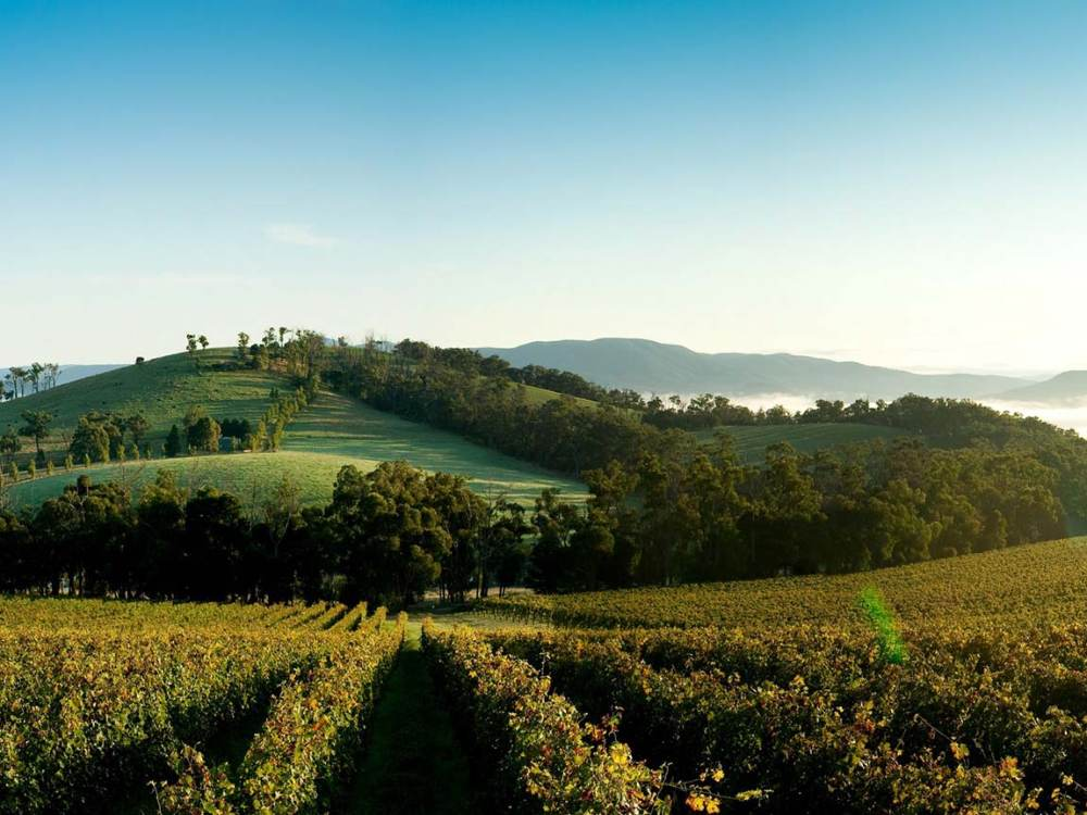 Travel Yarra Valley Winery - Best Solo Getaways:一趟犒赏心灵之旅