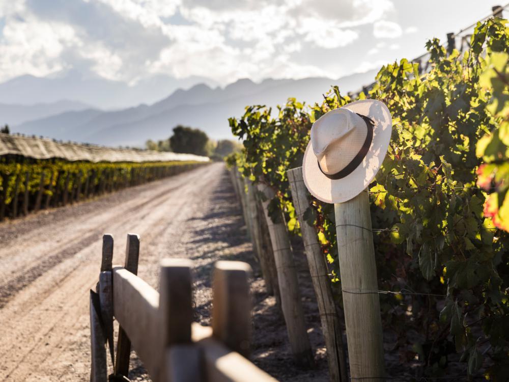 Terrazas De Los Andes Vineyards Argentina Kingssleeve