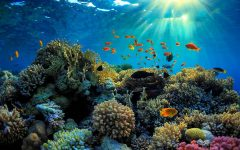 Sea Paradise Great Barrier Reef Travel Cover 240x150 - Sea Paradise:畅游大堡礁海洋乐园
