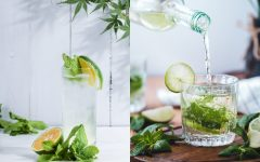 6 things about mojito cocktail 240x150 - 6个关于 Mojito 鸡尾酒的小知识