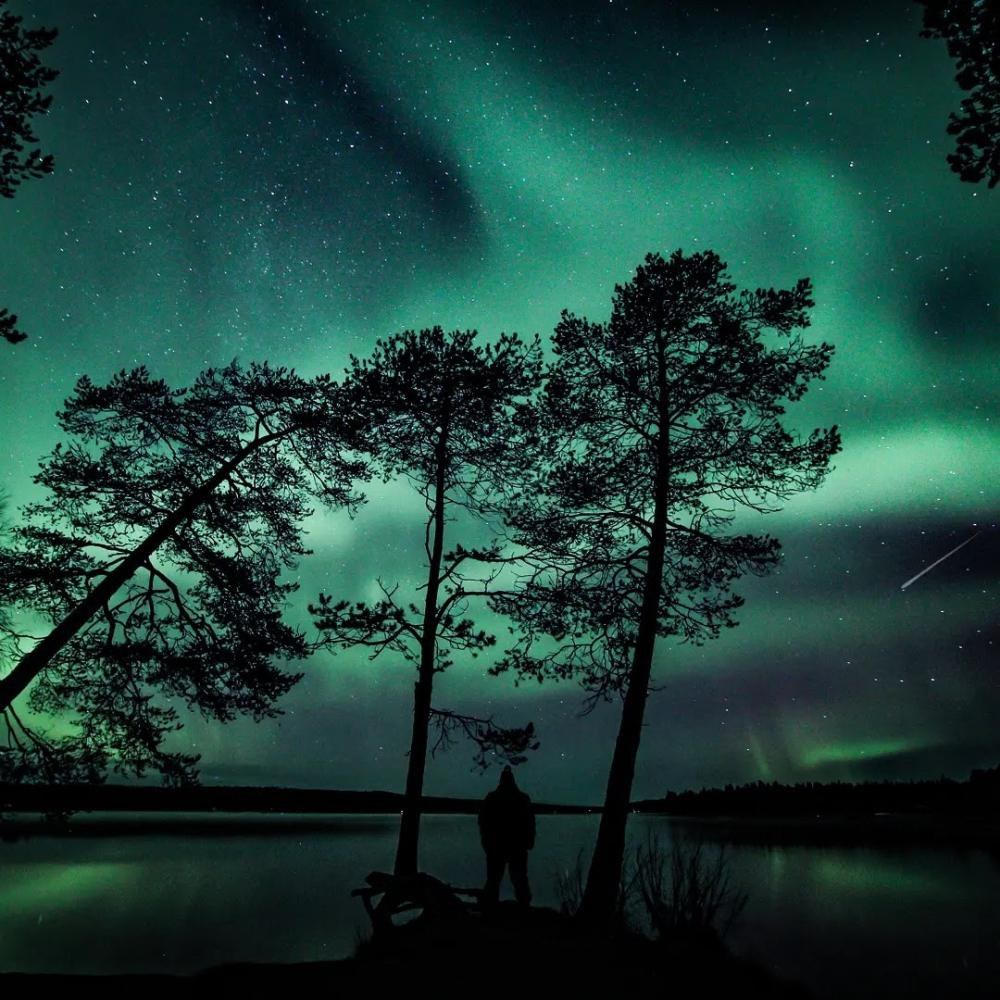 a few trees are the subject but the backdrop is undoubtedly the northern lights - 带上你最爱的人到芬兰Rovaniemi看浪漫的北极光!