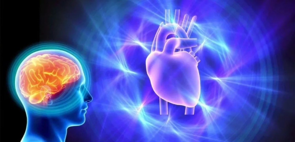 the brain and heart rate - 我们应该如何面对与处理焦虑?